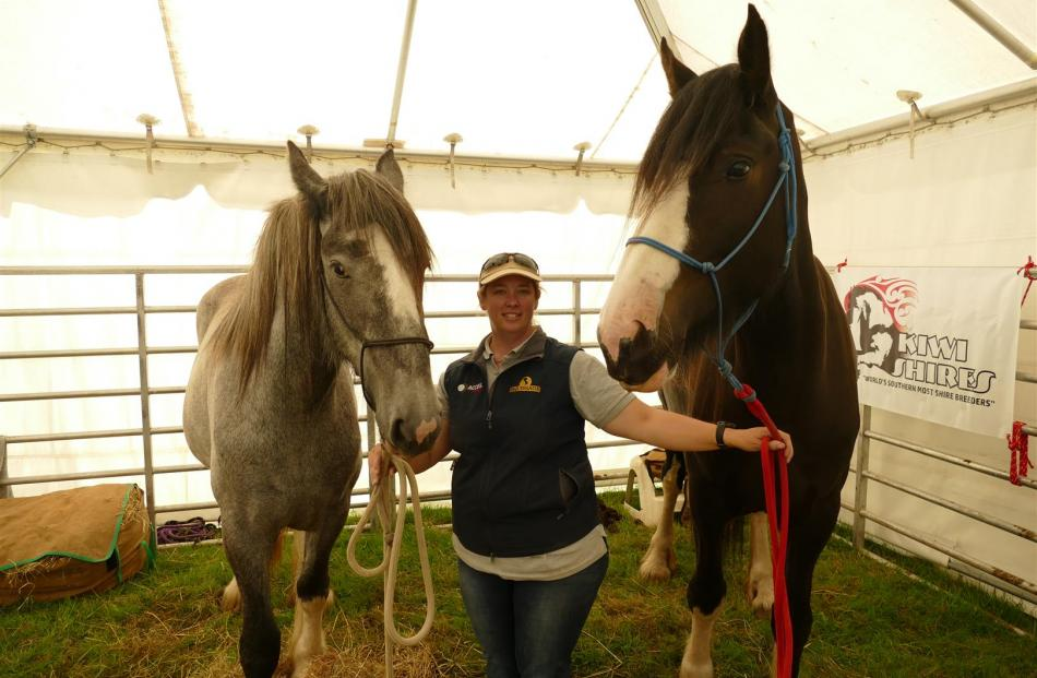 Verity Kennard, of West Plains, with her two Shire horses, 2-year-old Bailey, left, and 3-year-old Penny, were a popular attraction  at  the petting zoo at the 151st annual Southland A&P Show at Donovan Park, in Invercargill, on Saturday.