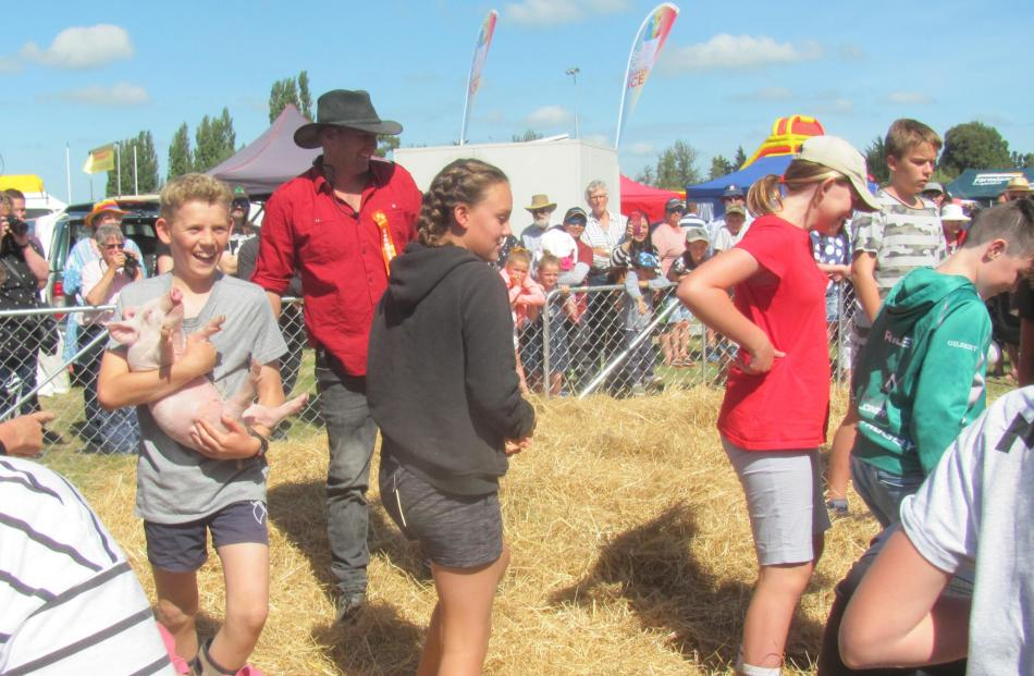 Catching one of four pigs during a competition for children aged 10 and over.