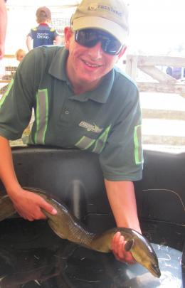 Charlie Johnston, of Rolleston, handles an eel in the pet tent.