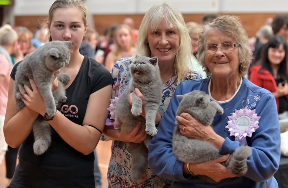 At the cat show in Mosgiel yesterday are (from left) Jenna Boyes, holding blue exotic Ispisakat...