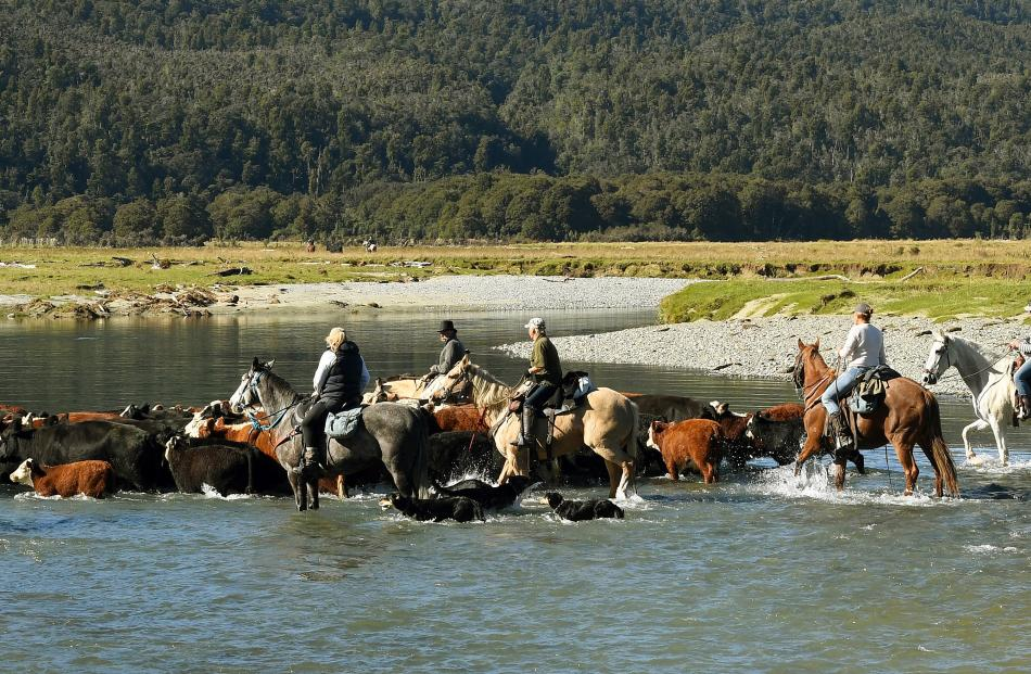 The tail-end of the cattle are followed by riders over the Martyr River.
