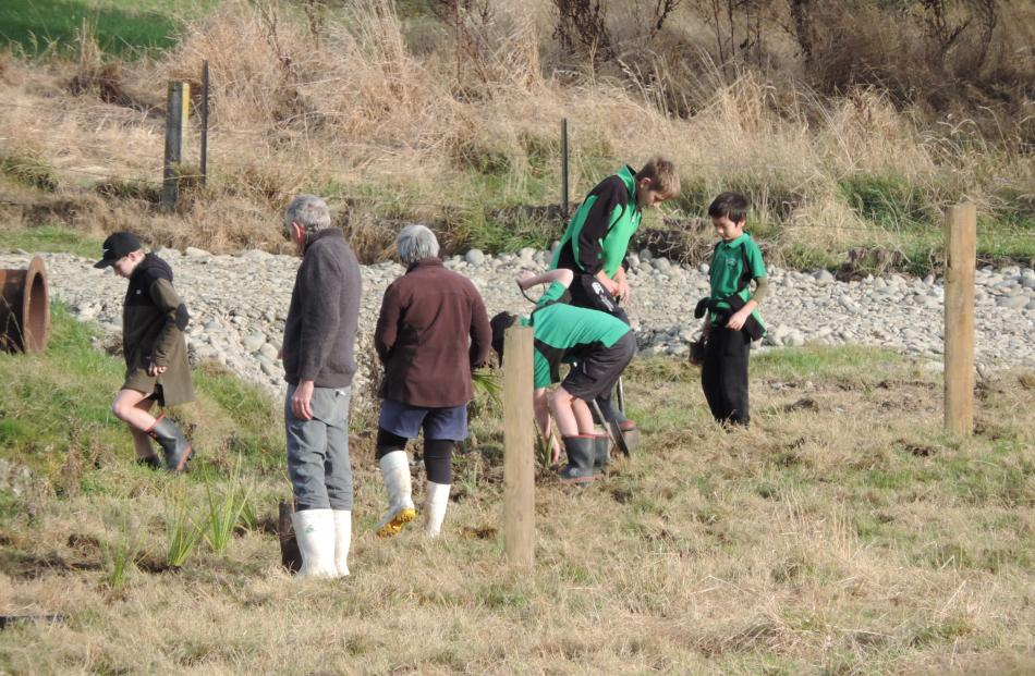A shingle area close to the river gets its share of the new plants.