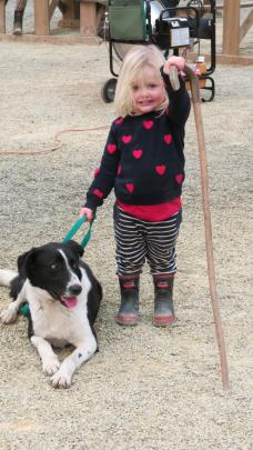 Allie Stewart (2), of Greenvale, was at the dog trials to watch her grandfather Neil Evans, of...