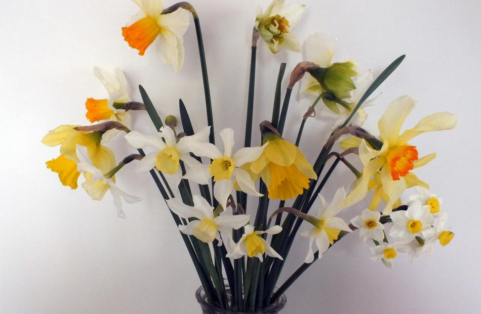 Grandma's sixpenny vase is perfect for daffodils.