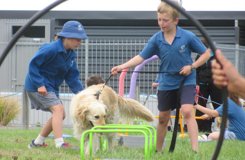 Pupils and their pets show their stuff during the dog obstacle course event.