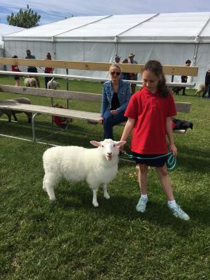 Cust School pupil Samara Van Wyk's (11) lamb Shelby was so white, even Canterbury A&P Association...