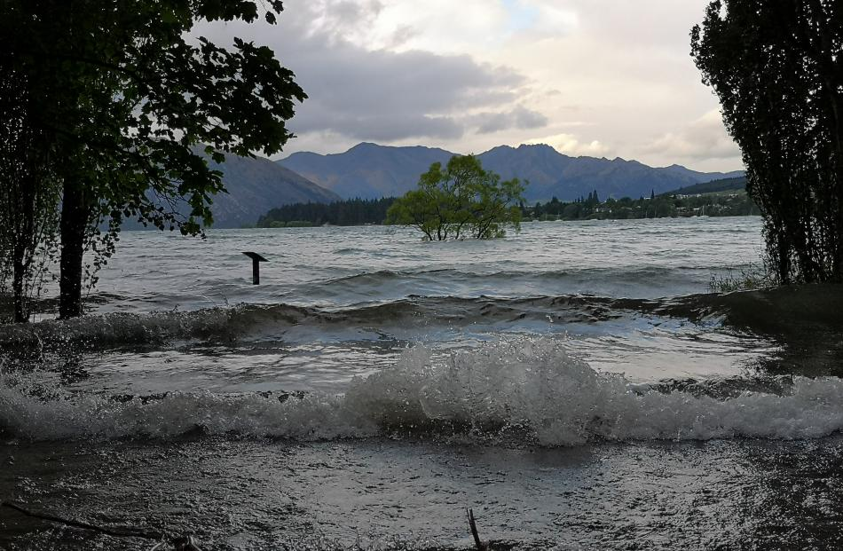 The iconic Wanaka Tree submerged in the lake.