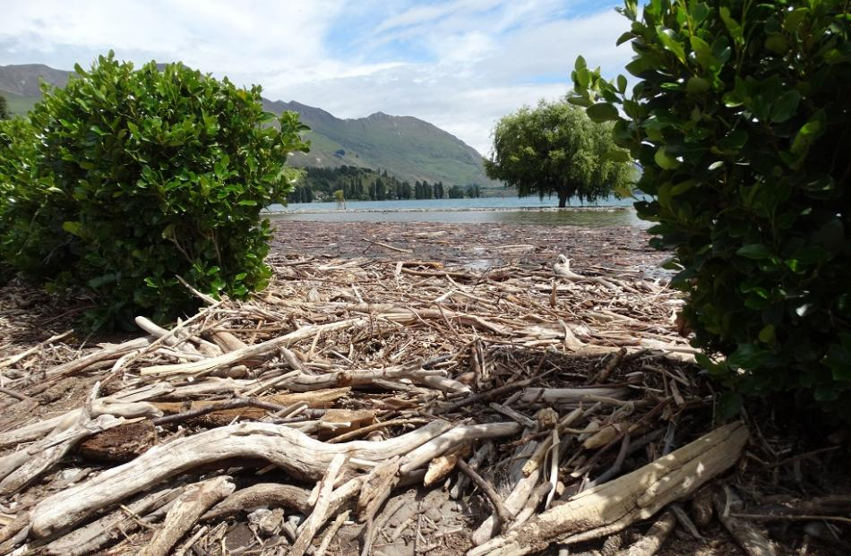 As the level of Lake Wanaka drops, dozens of hectares of driftwood are being revealed along Roys...