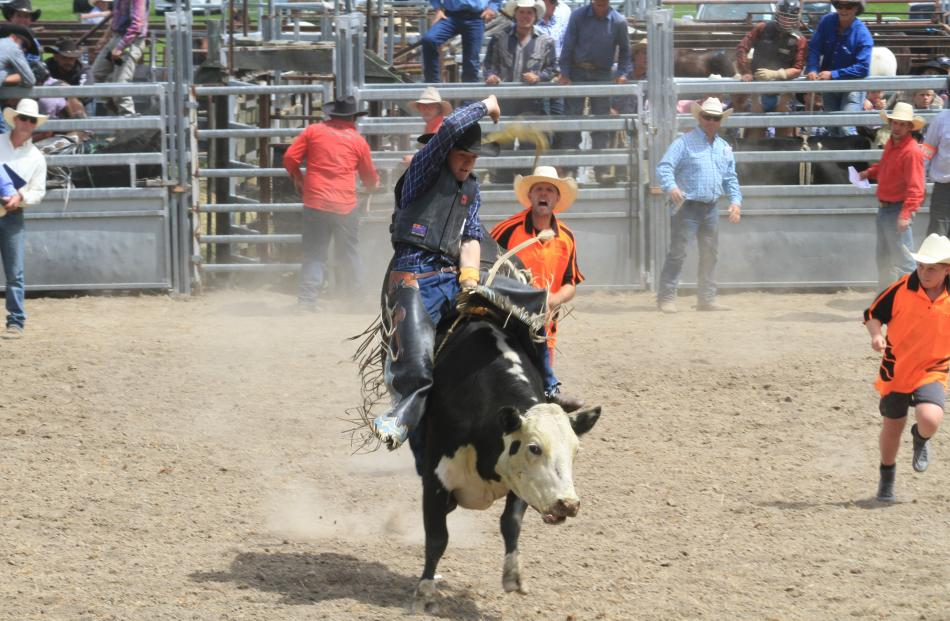 Oscar Nott, of Wanaka, competes in the second division steer ride.