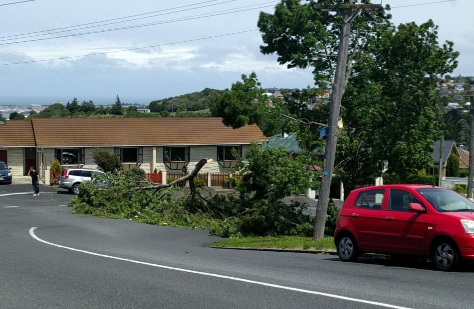 This tree branch has just come down on the corner of Pine Hill Road and Fea Street. Photo: Brian O'Neill