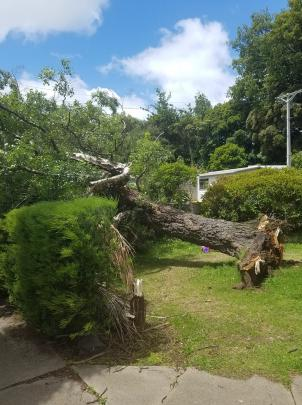 An uprooted tree in Lonsdale St, Belleknowes. Photo: Chimere Andrews