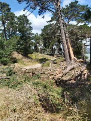 A fallen tree near in Warrington. Photo:Andrew Morrison