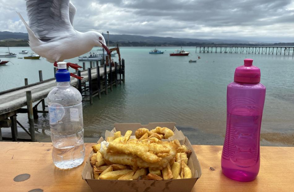 A seagull almost helps itself to some freshly cooked blue cod from The Fish Wife, Moeraki, on...