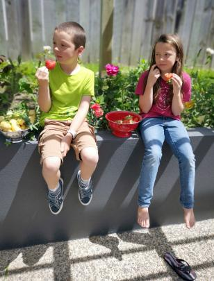 Liam (8) and Sophie (10) Drummond sample their homegrown strawberries in Sunninghurst. Photo:...