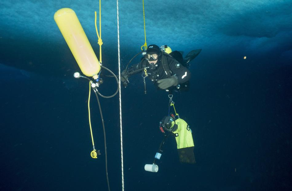 Niwa specialist diver Leigh Tait breathes from a nitrox tank at the end of his dive, one of many...