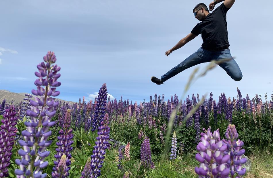 Lawrance Lin Nunez (28), of Dunedin, leaps above the lupins at Tekapo. Photo: Ann Antony