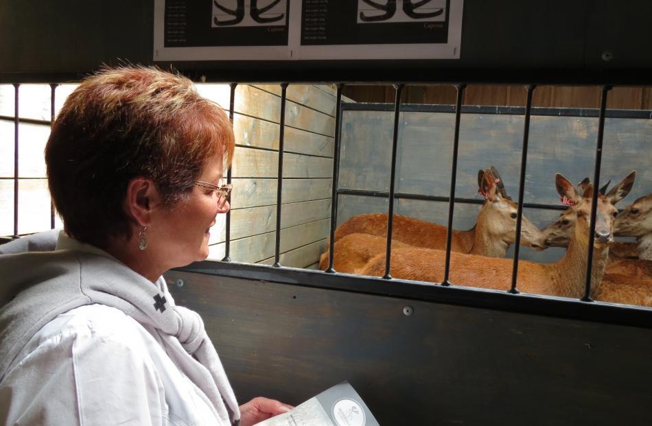 Deer farmer Dianne Allan, of Glenure-Balfour, takes careful note of the deer on offer.