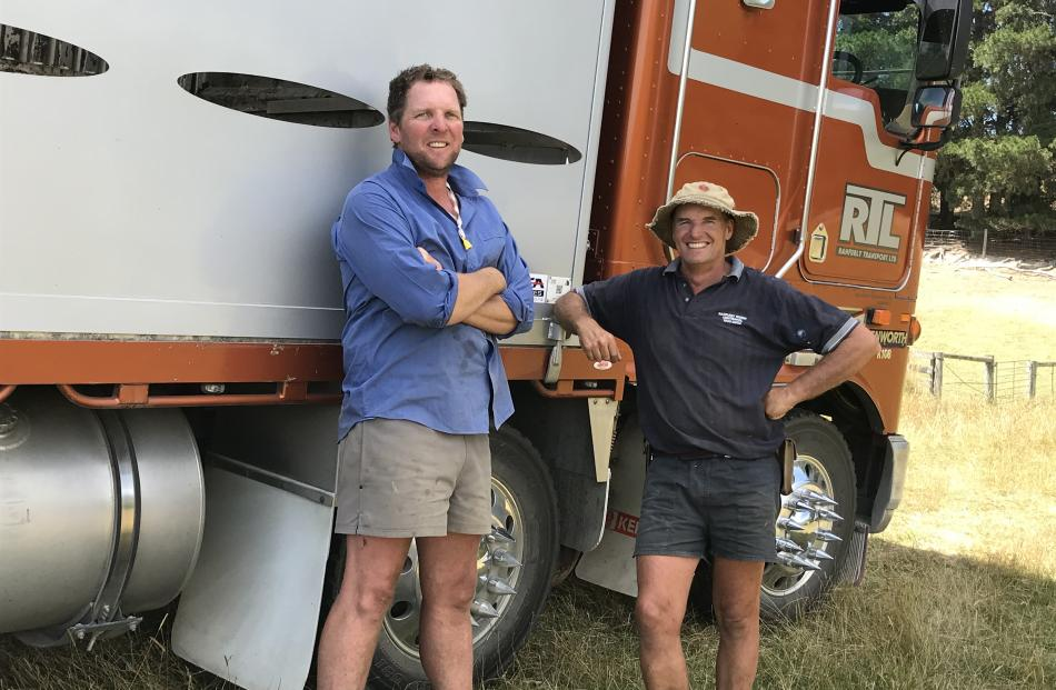 Longlands Station leaseholder Logan Dowling and equity partner Phil Dowling load store lambs at...