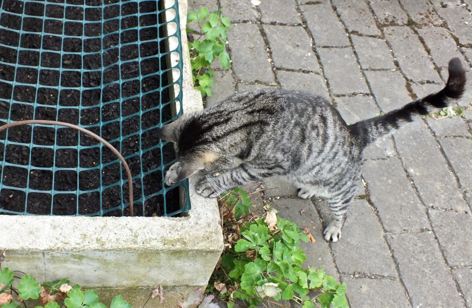 Step 4 . . . Horace the cat is defeated by netting.