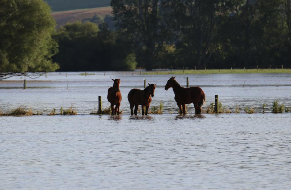 Horse stranded in a paddock on the Riversdale Pyramid Rd as Mataura River floods farmland. Photo: Sandy Eggleston