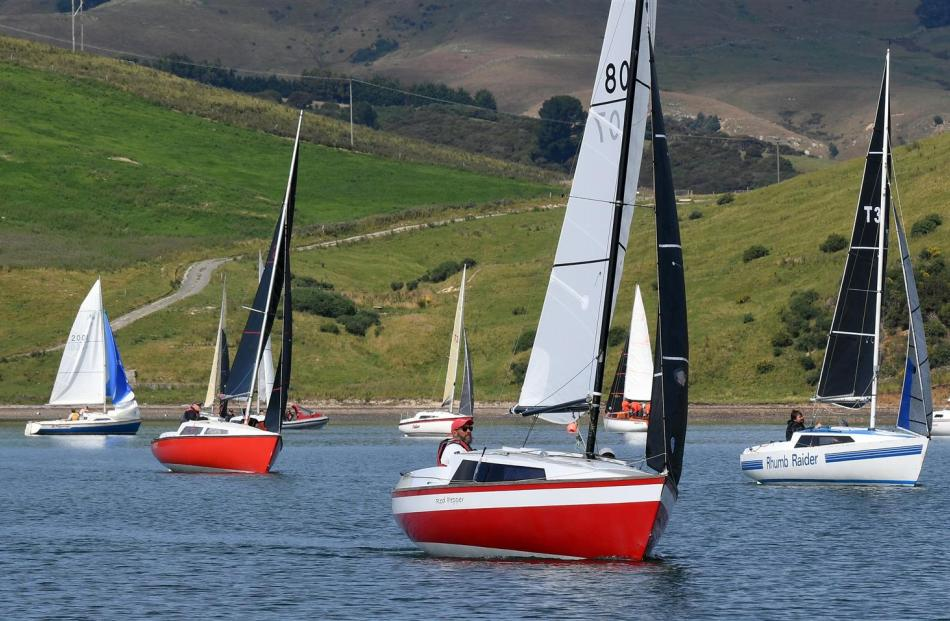 Noelex yachts compete in the national championships on Otago Harbour yesterday. PHOTOS: STEPHEN...