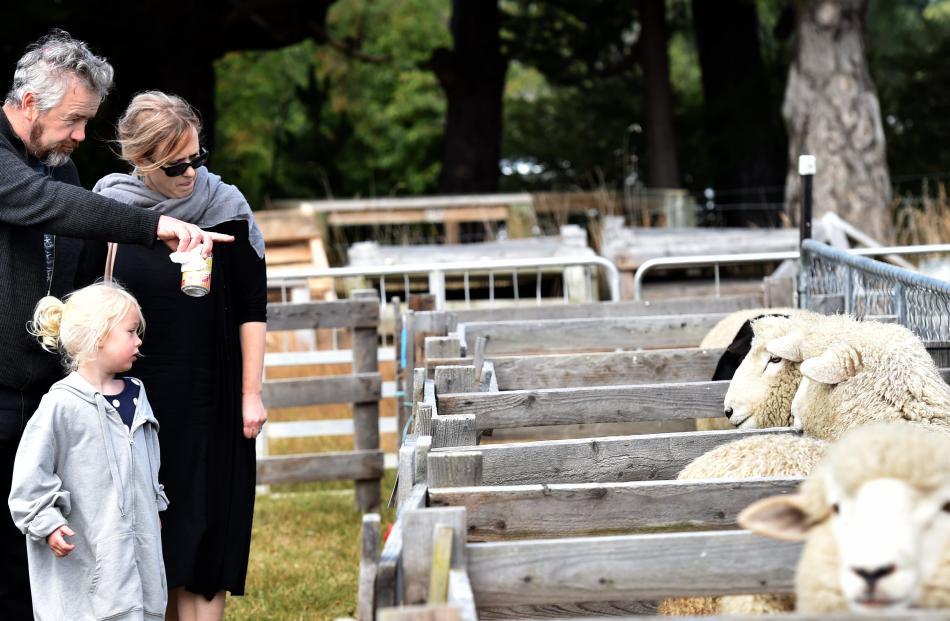 Matt, Sarah and Eloise (5) Smith, of Dunedin, inspect the sheep entries.