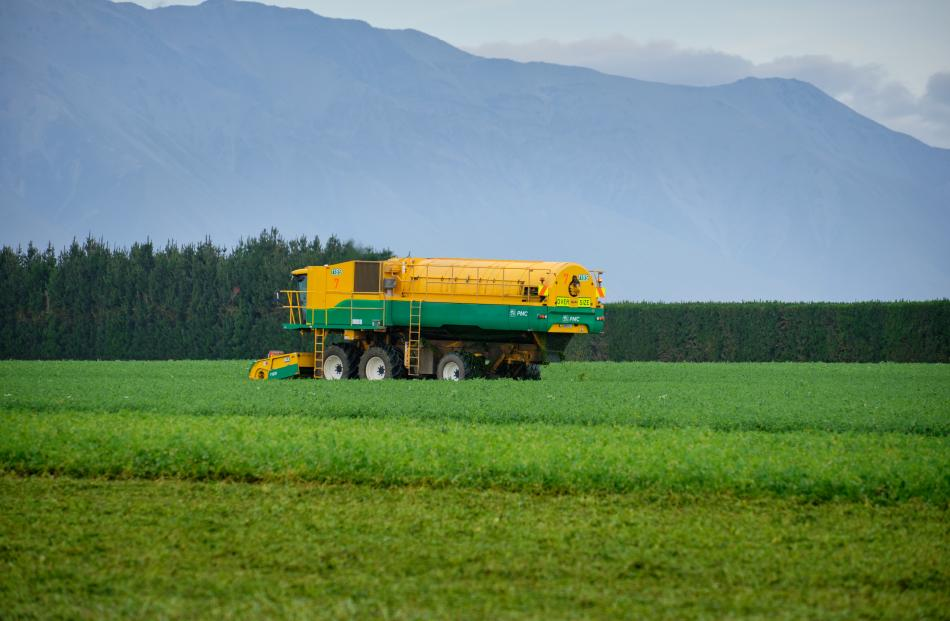 Harvesting peas on the Maw family farm at Barrhill is a tightly co-ordinated operation ensuring...