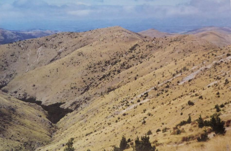 Photograph showing the spread of wilding pines at Mid Dome, near Lumsden  in Northern Southland...