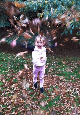 Aliza Taylor-Holmes (5) plays in some leaves while out for a walk in Mosgiel at Easter weekend....