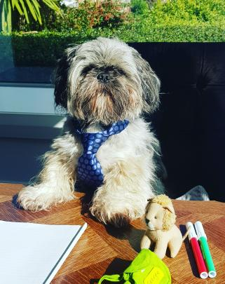 George is ready for online lessons. PHOTO: SARAH PEETERS