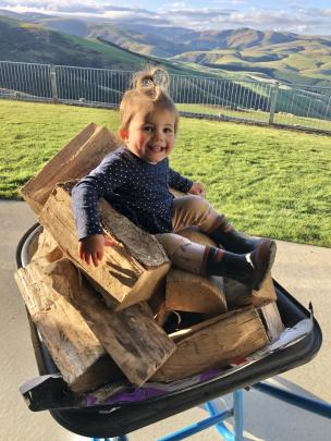 """Life goes on . . . Harriet Reeves (19 months) """"help"""" to bring in the firewood at home in..."""