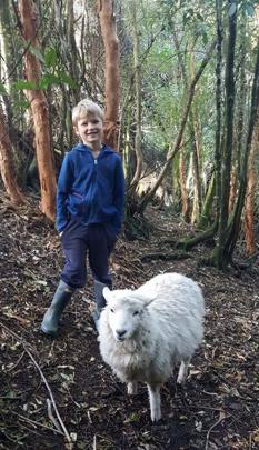 Herding the sheep . . . Luca Cleland (7) of Pine Hill and pet ewe Shirley go on an adventure...