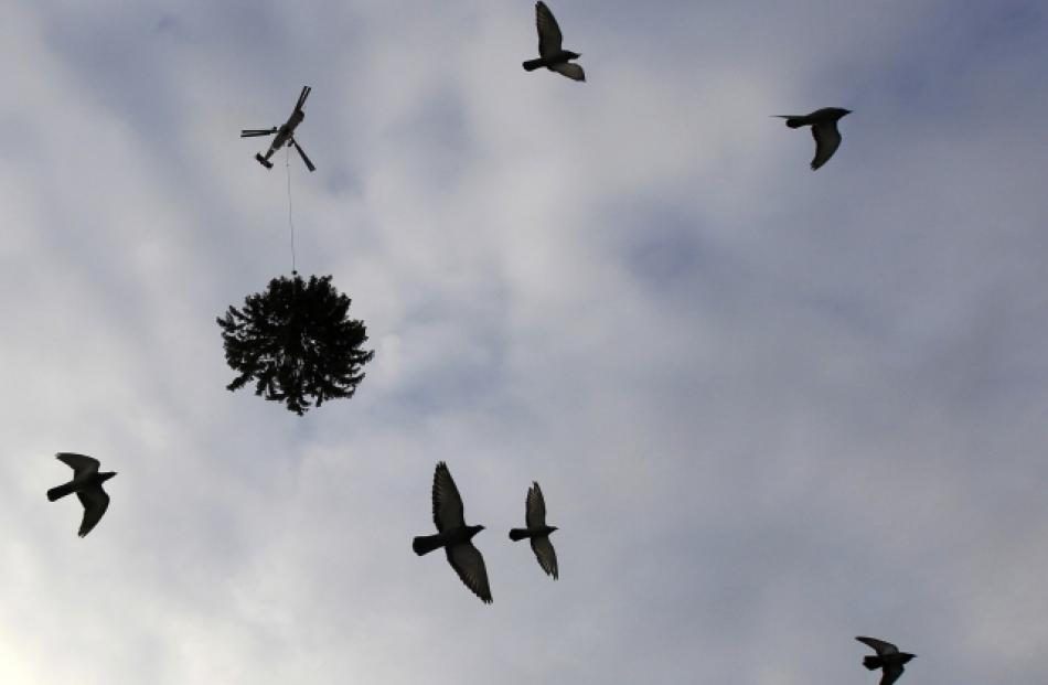 Birds take to the air as a helicopter flies over the Swiss Parliament building transporting the...
