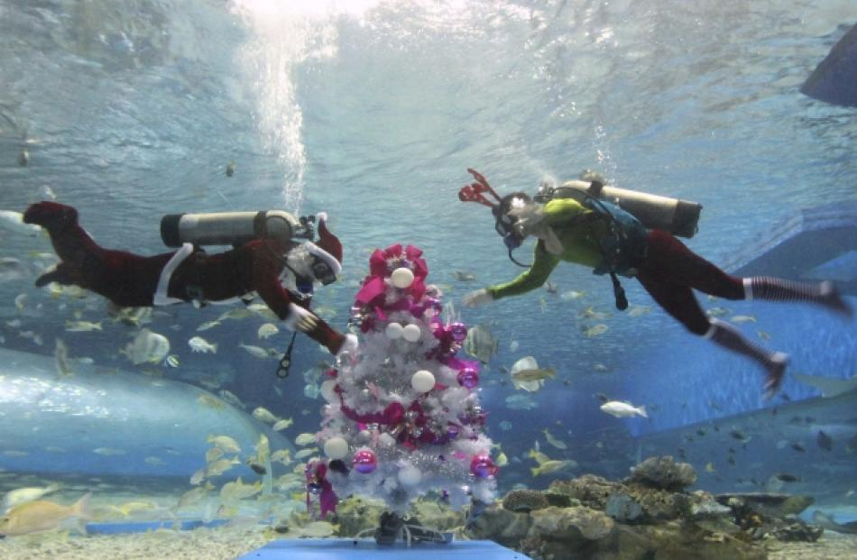 Divers decorate a Christmas tree inside a huge aquarium as part of celebrations for Christmas at...