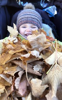 You can't walk past a pile of leaves and leave them. Estelle Percasky (3), of Arrowtown, giggles...