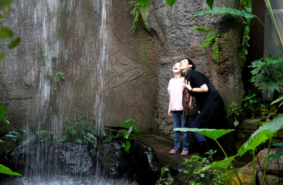 Visitors enjoy the waterfall in the Tropical Forest at the Otago Museum.