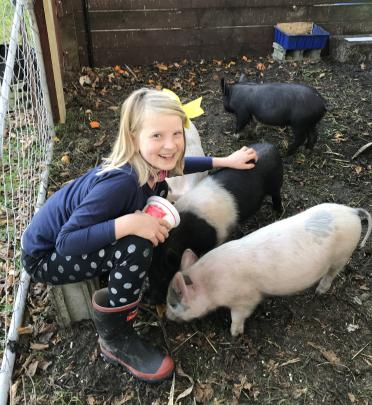 Amelia Claridge (8), of Oamaru, with her new pigs. They all have names and are getting very...