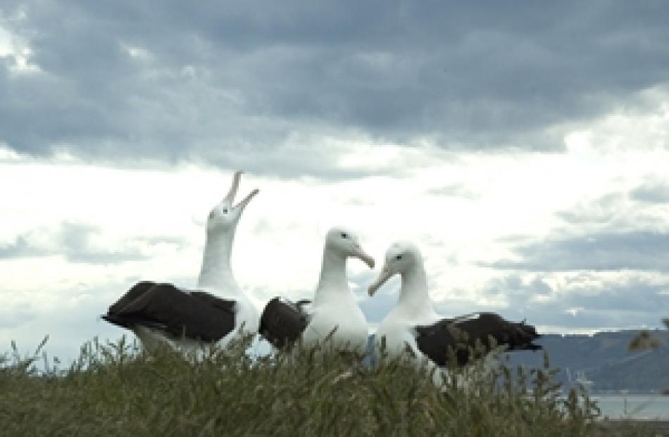 Albatross Centre