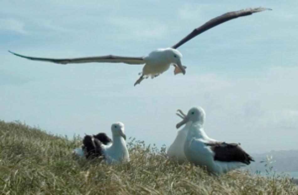 Albatross Landing