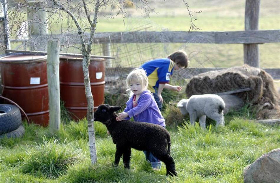 Sandy's children Kate (3) and Ben (8) Howard play with pet lambs Snowy and Sooty. Photo by Linda...