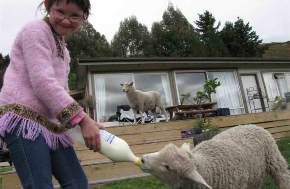 Gina McGrosky (9), of Christchurch, feeds lambs Patrick and Blossom.