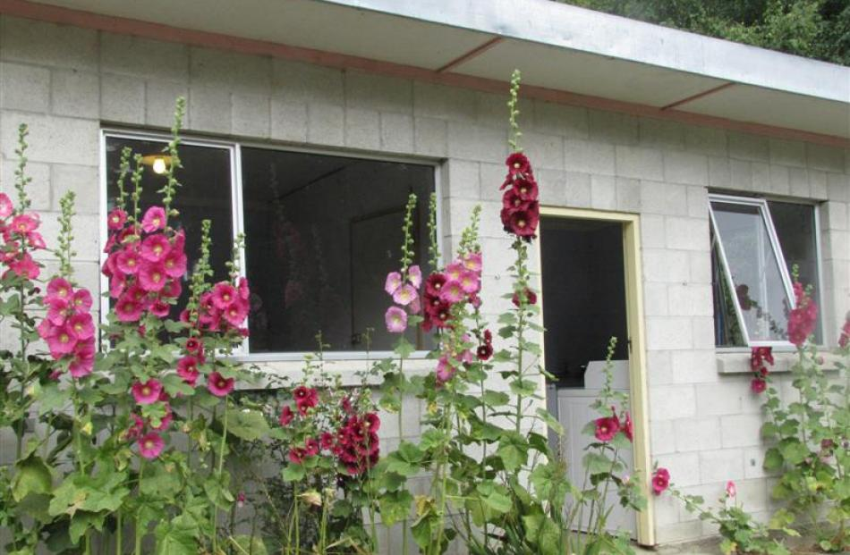 Hollyhocks brighten up  the laundry wall.