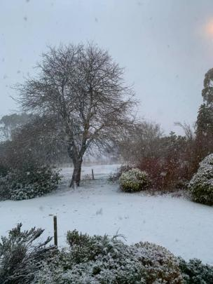 Snow up the top of Moa Flat this morning. Photo: Marinka Kingma