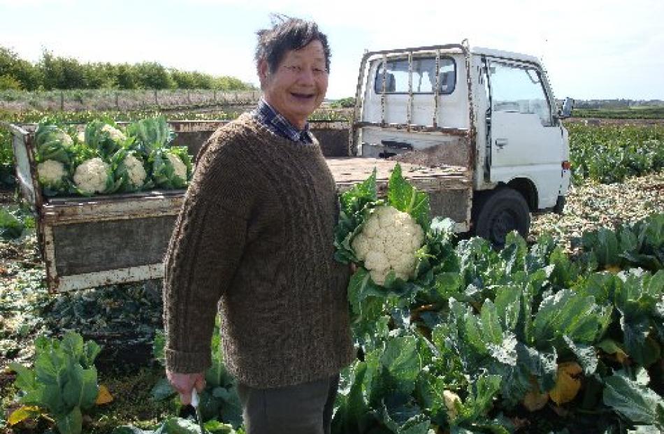 Reggie Joe harvests cauliflowers on his farm last year.