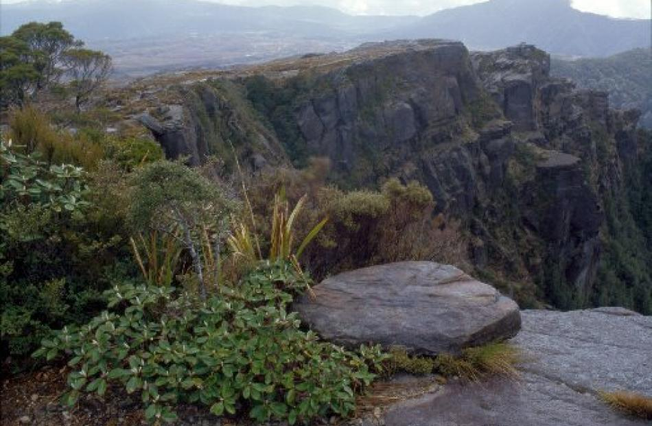 The Denniston Plateau, above Westport, is home to rare flora and fauna and 80 million tonnes of...