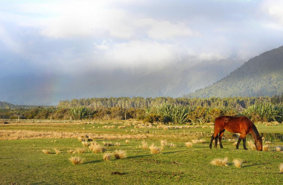 A horse chews on some grass at Haast Beach as sunset approaches.