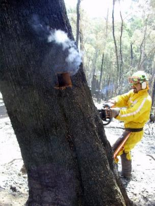 Otago Doc rural firefighter Patrik Eschenmoser  cuts a hole in a tree so a fire burning in a...