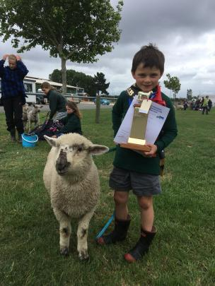 Angus Leslie (6), of Springston School, has his hands full after winning junior lamb champion...