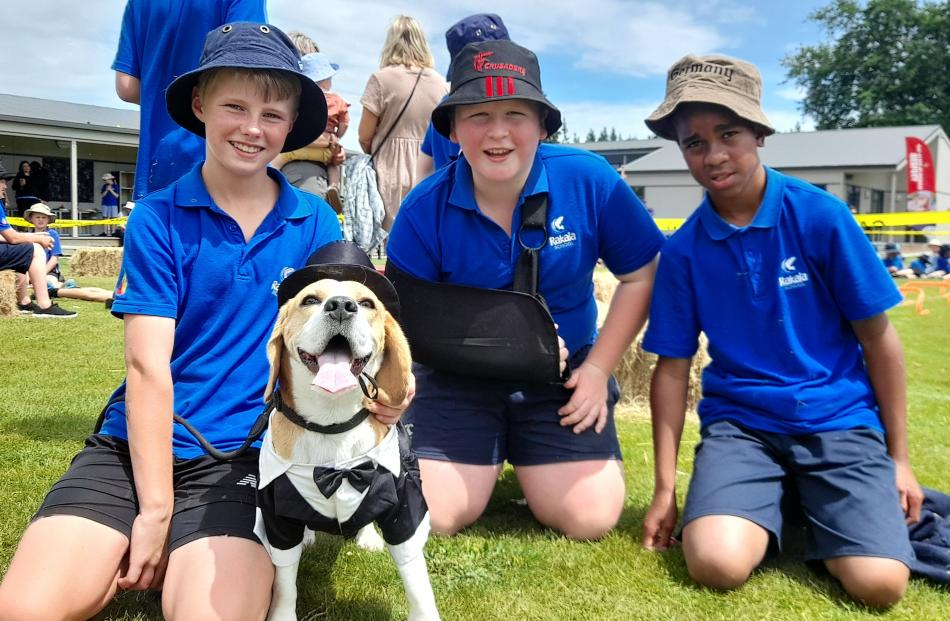 3-year-old beagle Sam dresses for the occasion and a chance to hang with owner Charlie Marshall...