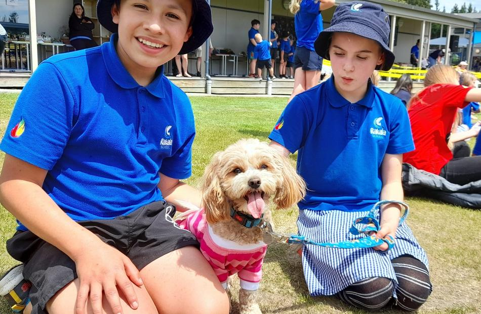 2-year-old Lola, a cavoodle tsu shih tzu cross, owned by teacher Mrs Stapleton, with Diego Vidal...